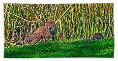 Big Yawn By Little Cub Beach Towel by Miroslava Jurcik