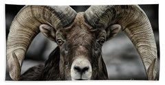 Bighorn Ram Beach Sheet