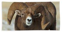Bighorn Ram In Montana Beach Towel