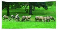 Beach Towel featuring the digital art Bighorn Sheep Ewes  by Chris Flees