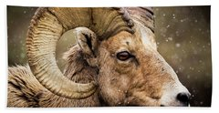 Bighorn Sheep In Winter Beach Towel