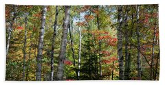Beach Towel featuring the photograph Birches In Fall Forest by Elena Elisseeva