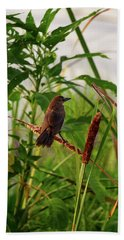 Bird In Cattails Beach Towel
