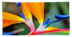 Bird Of Paradise After The Rain Beach Towel