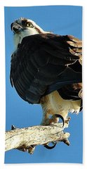 Birds 10 17 Beach Sheet