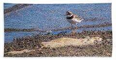 Birds Of Maine Beach Sheet by Trace Kittrell
