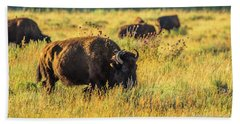 Bison In Autumn Gold Beach Sheet by Yeates Photography