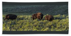 Bison In Autumn Light Beach Sheet by Yeates Photography