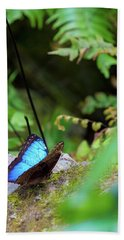 Black And Blue Butterfly Beach Towel
