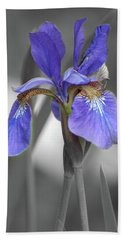 Beach Towel featuring the photograph Black And White Blue Bearded Iris by Brenda Jacobs
