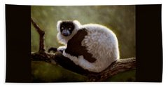 Black And White Ruffed Lemur Beach Towel