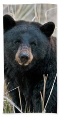 Black Bear Closeup Beach Towel