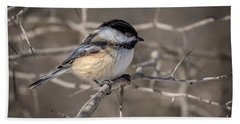 Black-capped Chickadee Iv Beach Towel