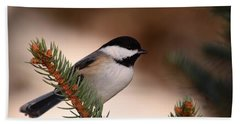 Black-capped Cickadee II Beach Towel