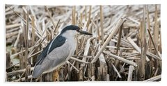 Black-crowned Night Heron 2017-1 Beach Towel by Thomas Young