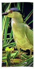 Beach Towel featuring the photograph Black Crowned Night Heron by Joseph Hollingsworth