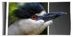 Black Crowned Night Heron Out Of Bounds Beach Towel