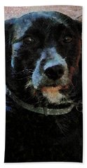 Black Dog Worry Highlights Beach Towel