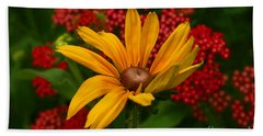 Black-eyed Susan And Yarrow Beach Towel