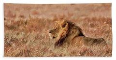 Black-maned Lion Of The Kalahari Waiting Beach Towel