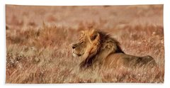 Black-maned Lion Of The Kalahari Waiting Beach Sheet