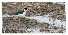 Black-necked Stilt 2017-1 Beach Towel by Thomas Young