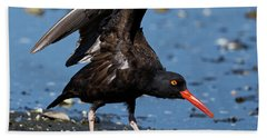 Black Oyster Catcher Beach Towel