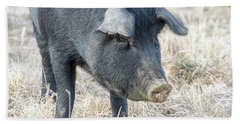 Beach Towel featuring the photograph Black Pig Close-up by James BO Insogna