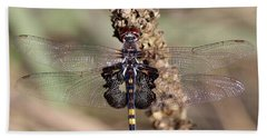 Black Saddlebags Beach Sheet