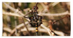 Beach Towel featuring the photograph Black Saddlebags Dragonfly by William Selander