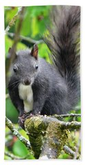 Black Squirrel In The Cherry Tree Beach Towel by Valerie Ornstein