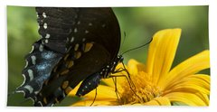 Black Swallowtail Drinking Beach Sheet