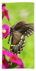 Beach Towel featuring the photograph Black Swallowtail Butterfly by Christina Rollo