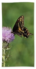 Beach Towel featuring the photograph Black Swallowtail Butterfly by Sandy Keeton