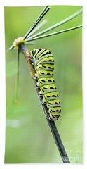 Black Swallowtail Caterpillar Beach Towel by Debbie Green