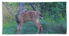 Black-tail Deer Fawn 2 Beach Sheet by Ansel Price