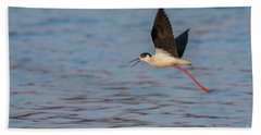 Beach Towel featuring the photograph Black-winged Stilt - Himantopus Himantopus by Jivko Nakev