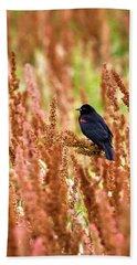 Blackbird Beach Sheet
