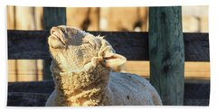 Bleating Sheep Beach Towel
