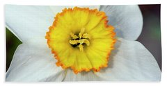 Bloom Of Narcissus Beach Towel by Michal Boubin