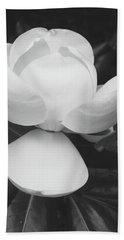 Blooming Magnolia- Art By Linda Woods Beach Towel