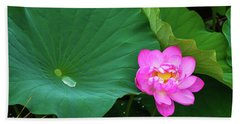 Blooming Pink And Yellow Lotus Lily Beach Towel