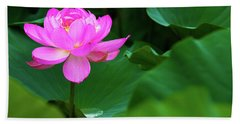 Blooming Pink Lotus Lily Beach Towel