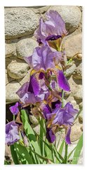 Beach Towel featuring the photograph Blooming Purple Iris by Sue Smith