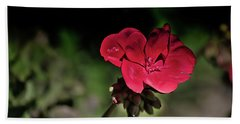 Beach Towel featuring the photograph Blooming Red Geranium by Donna Lee
