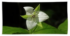 Beach Sheet featuring the photograph Blooming Trillium by Mike Eingle