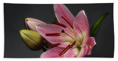 Blossoming Pink Lily Flower On Dark Background Beach Towel