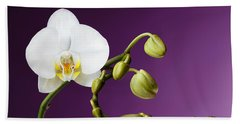 Blossoming White Orchid On Purple Background Beach Sheet