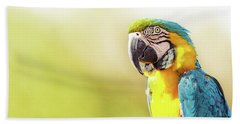 Blue And Yellow Macaw With Copy Space Beach Towel