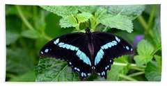 Blue Banded Swallowtail Butterfly Beach Towel